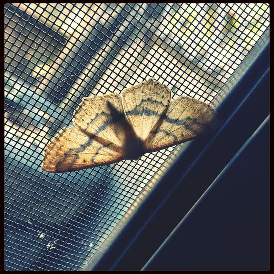 Little moth friend I found in my kitchen c: Picoftheday Moth Beautiful Spotted