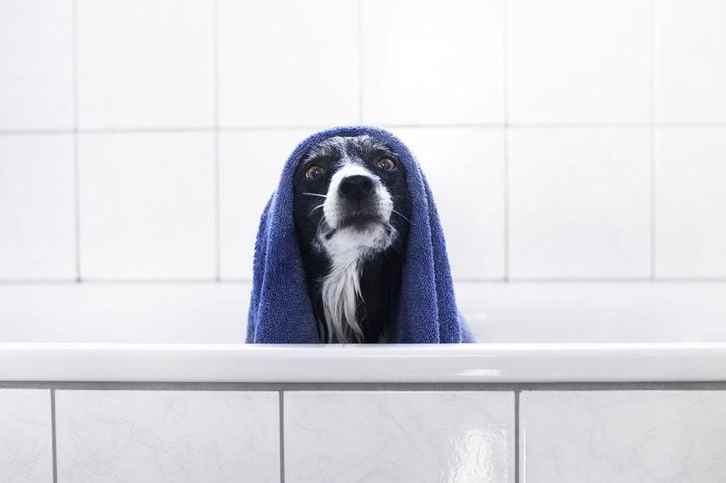Portrait of dog in bathtub