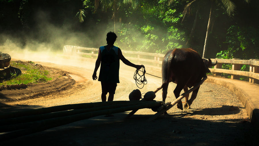 Farmer bringing his carabao (water buffalo) home after a hard day's work Beast Of Burden Bicol Bubalus Bubalus Bubalis Catanduanes Catanduanes Island Dusty Road Farm Living Farmer Filipino Culture Going Home Hard Work Islander It's More Fun In The Philippines Philippines Philippines Photos Plow Plowing Silhouette Teamwork Water Buffalo Work Ethic Working Animal Working Hard Wow Philippines