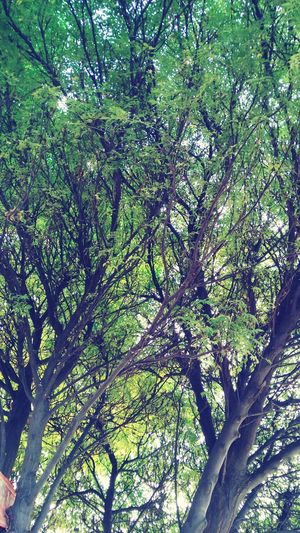 Tree Low Angle View Green Color Nature Scenics No People