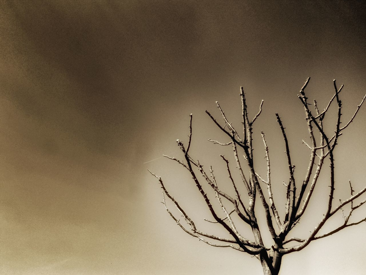 nature, branch, bare tree, sky, no people, outdoors, beauty in nature, day