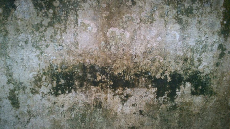 Wall. Wall Wet Grainy Colors Backdrop Background Rain Design Old Fashion Natural EyeEm Bestsellers