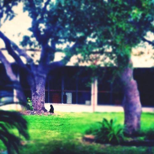 Campus Kitties
