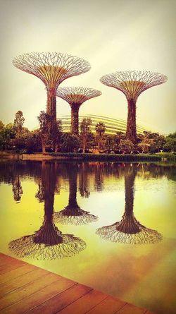 Singapore Sepia
