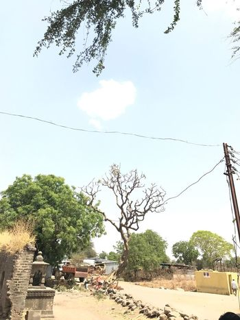 Every place has a story & its own beauty. Tree Day Outdoors Growth Sky Nature No People Branch Beauty In Nature Maharashtra Iphone7 Summers India Village Beauty Basiclife