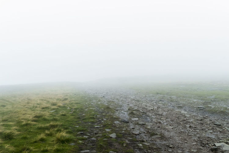 Scenic View Of Grassy Field During Foggy Weather