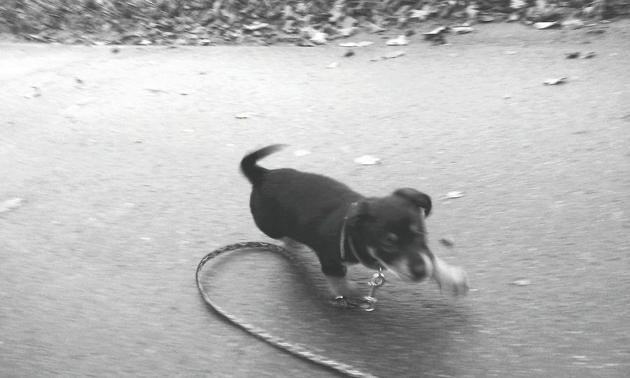 Uczy się chodzić na smyczy 😍 Pies Smycz Nauka