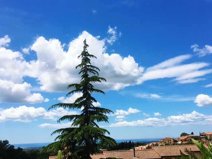 Sky Cloud - Sky Plant Tree Nature Blue Day Beauty In Nature No People Low Angle View Outdoors Sunlight Tranquil Scene