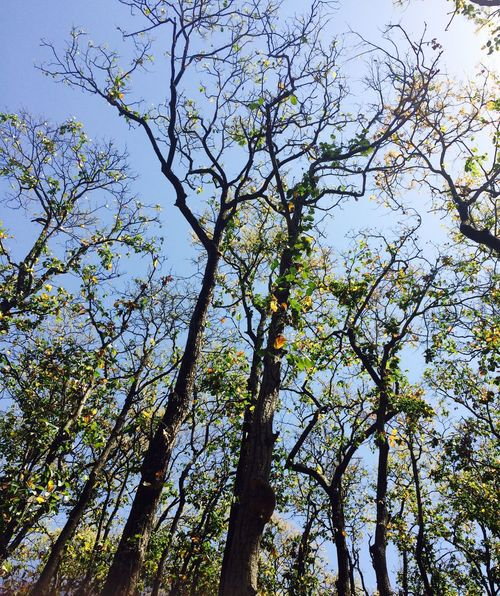 Tree Day Outdoors No People Sky Low Angle View Branch Beauty In Nature Scenics