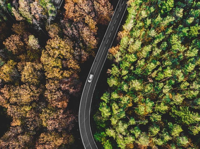 Drone shot of forest in autumn Dji Brno Green Fall Autumn Tree Forest Road Drone  No People High Angle View Day Nature Plant Sunlight Full Frame Outdoors Plant Part Leaf Pattern Beauty In Nature Land Field Tree Green Color Park