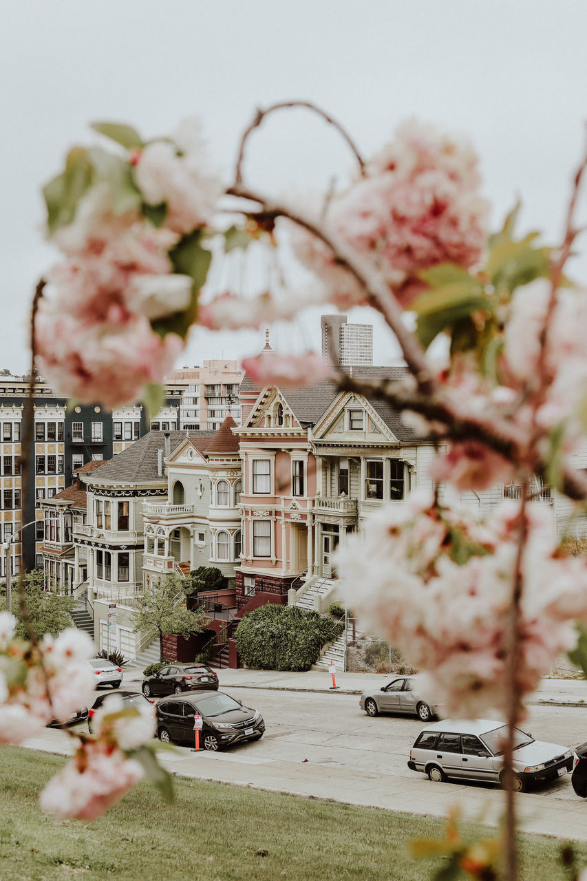 VIEW OF BUILDINGS AND WHITE FLOWERS