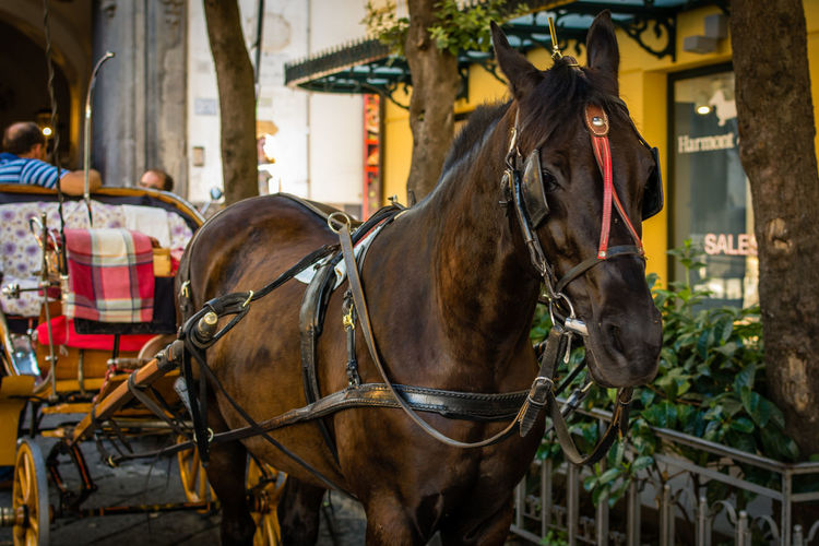 Horses horse cart