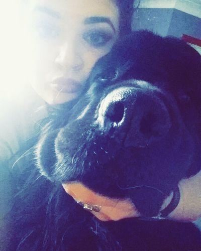 That face tho.. 😙❤ Newfy Love Babe Newfoundland Ilovehim Pets Cute