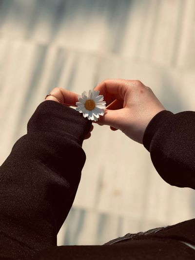 Beautiful Hands Daisy Flower Human Hand Hand Real People Human Body Part Holding Springtime Decadence Focus On Foreground Ring People Women Love Jewelry Lifestyles Positive Emotion The Minimalist - 2019 EyeEm Awards
