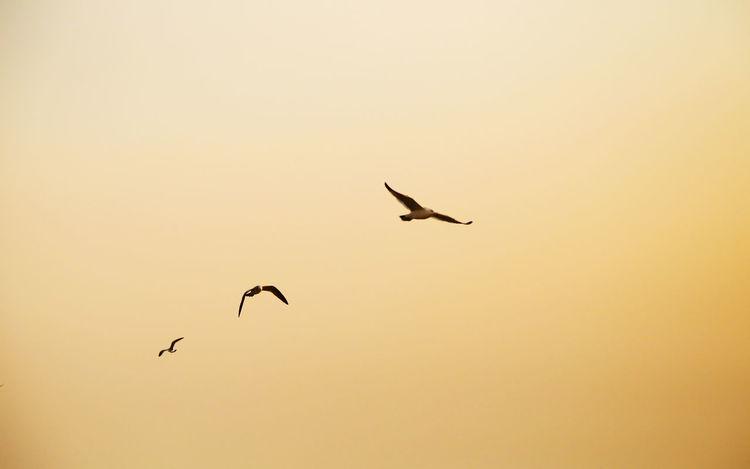 Sea Gull; Quet; Sea-gull; Fly Mew; Sea Mew; Sea Gull; Quet; Sea-gull; Quetzaltenango Sea Sea Mew Sea-gull