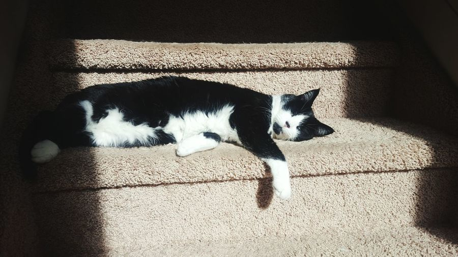 High angle view of cat on wall