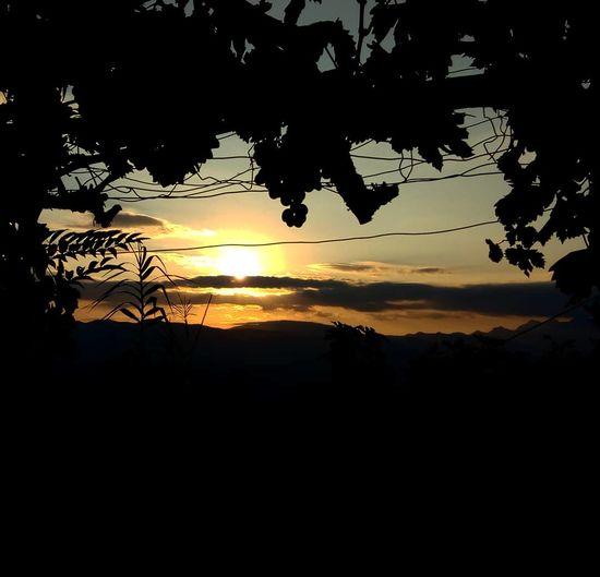 Tramonto in vigna Tree Sunset Sun Orange Color Sky Cloud - Sky Romantic Sky