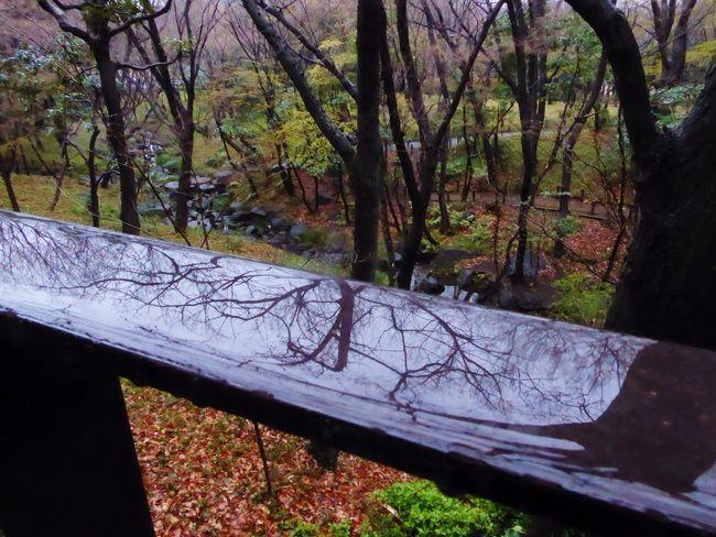 Streetphotography Rainy Days Rain Tree The Way Forward Tranquil Scene Streamlet Reflections
