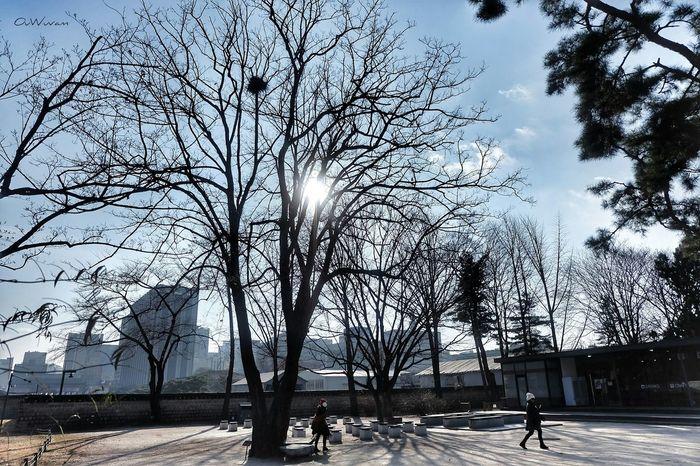 Monday Morning 😁✌ Koreatrip Gyeongbokgung Palace Tree Sky Nature Sunlight Outdoors Beauty In Nature Eyemphotography EyeEm Thailand Seoul, Korea Seoul EyeEm gallery Fujifilm_xseries Fujifilm XA2 Beautiful Day So