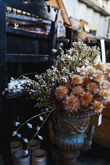 Flower Antique Flower Shop Japan Beautiful PLZ FOLLOW ME