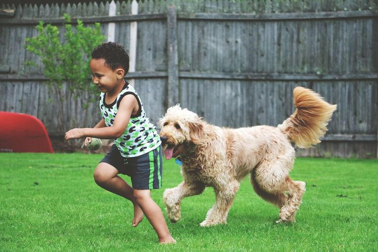 Cute boy playing with dog on grassy field against fence