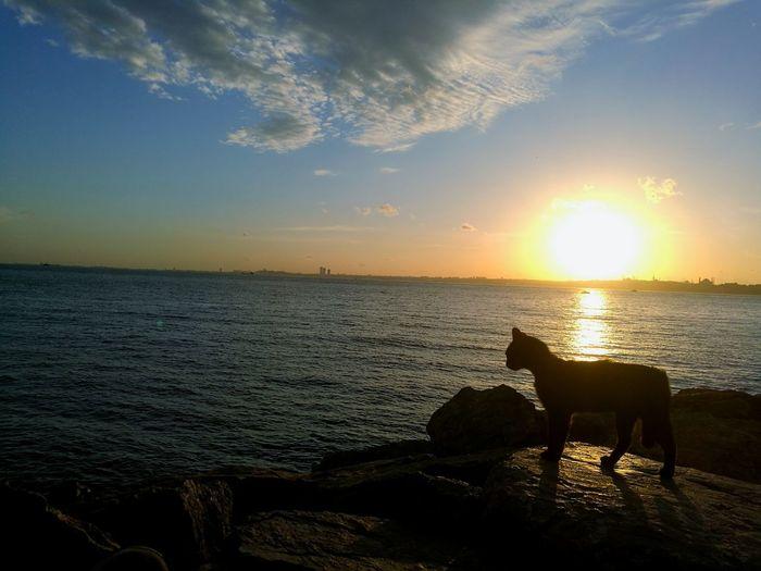 EyeEm Best Shots EyeEnOnInstagram EyeEm Nature Lover EyeEm Selects Sunset Water Sea Sunset Sun Beach Sunlight Silhouette Sky Animal Themes Horizon Over Water Cat