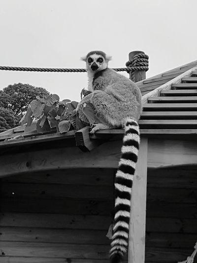Bird Perching Sitting Sky Vulture Suspension Bridge Falcon - Bird Hawk - Bird Bird Of Prey Owl Bridge - Man Made Structure San Francisco Bald Eagle