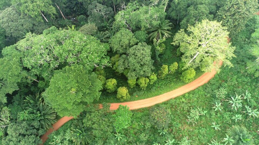 Green Color Plant Growth Nature Beauty In Nature No People Day High Angle View Sunlight Land Tranquility Lush Foliage Plant Part Freshness Outdoors Directly Above