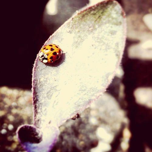 Ladybug First Eyeem Photo