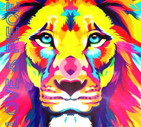 Lion King Of The Animals Colourful Loin Piece & Love Beautiful Creature Colourful Animal Dangerous Beauty