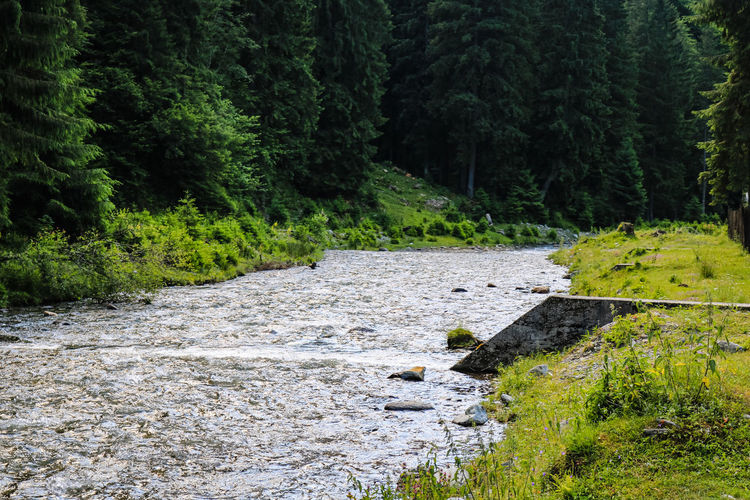 Scenic view of stream flowing amidst trees in forest