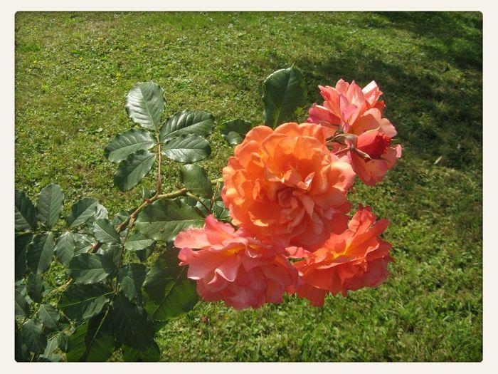 Павловск Flowers