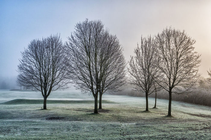 Beauty In Nature Branch Day Frosty Mornings Landscape Misty Nature No People Outdoors Sky Tranquil Scene Tranquility Tree