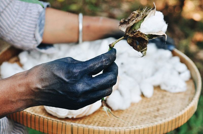 Cropped hand of man holding cotton outdoors