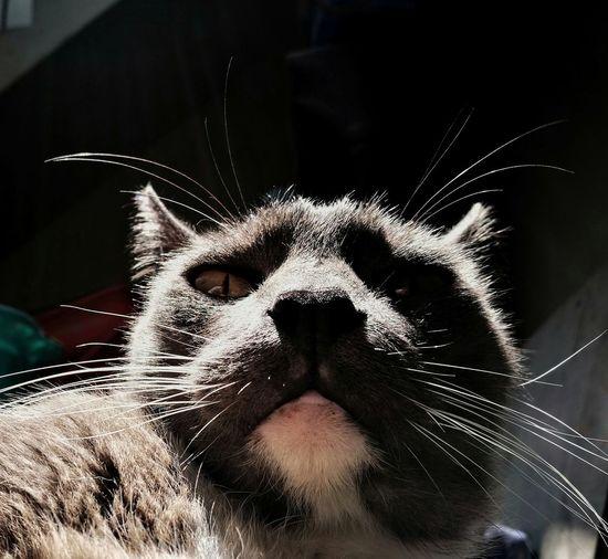 One Animal Domestic Cat Pets Cats Cat Gato Migatomodelo MiMio Animal Themes Feline