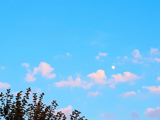 sky clouds and moon Light Day Moon Bird Flying Flock Of Birds Blue Summer Sky Cloud - Sky Sky Only Meteorology Heaven Cloudscape Plant Life Growing