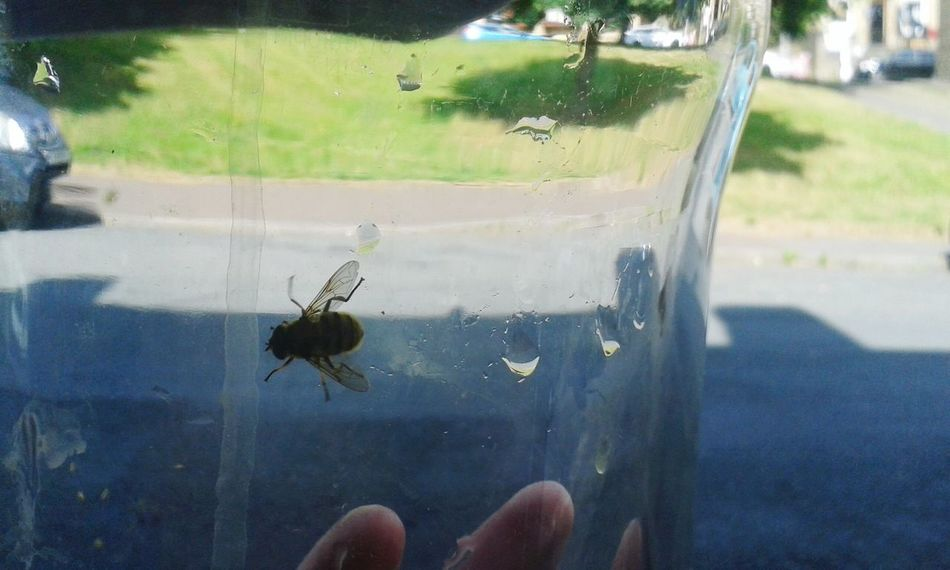 Letting out a wasp Nature_collection Summer Wasp Glass Ownphotos Nature Outdoors Frontdoor