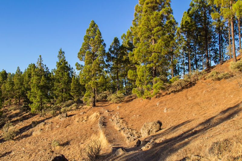 A trip on Gran Canaria Gran Canaria Gran Canary Island Hiking Nature Nature Photography Travel View Landscape Landscapes Travel Destinations View From Above Perspectives On Nature