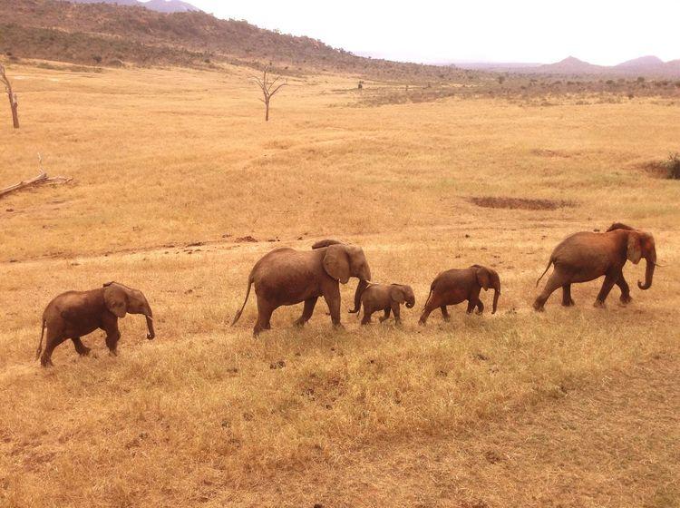 Safari @kenya First Eyeem Photo