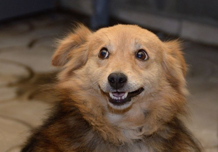 Dog smile Animal Themes Close-up Dog Mammal No People One Animal Portrait Snout