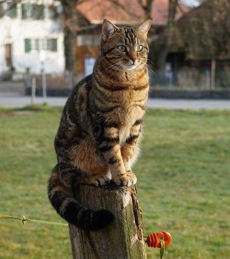 CAT Animal Themes Animal Focus On Foreground One Animal Mammal Vertebrate Day