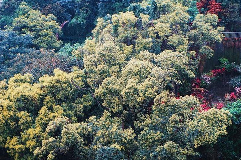 晚安世界 有些人你躲也躲不开,挡也挡不掉,也不必像伟人一样原谅所有人,爱所有人,讨厌就讨厌,喜欢就喜欢,这样真实的活着就可以了。 Vscocam Quotes Xhinmania Instadaily Photooftheday Flora Green Nature Photographyislife Mood Goodnight Showcase April EyeEm Taiwan Amazing Hello World Beautiful The Week Of Eyeem