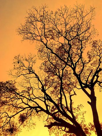 Yellow Tones Tree And Sky Beauty Of Nature Sunset Nature Silhouette Tree Sky