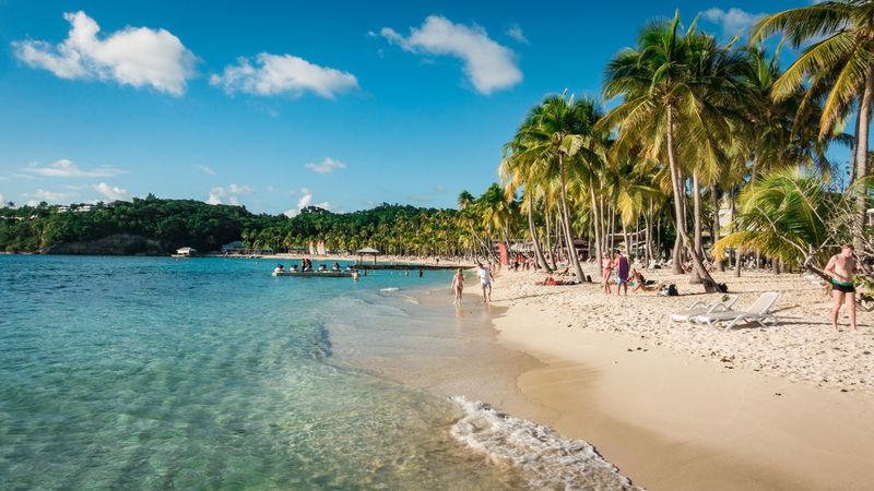 Beach La Caravelle, Guadeloupe. Aida AidaDiva Cruise Ship Guadeloupe La Caravelle Travel Aidacruises Beach Beauty In Nature Blue Carribean Nature Palm Tree Sand Sea Sky Travel Destinations Tree Water