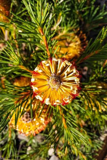 Berlin City Blackberryphoto Powerfull Colors EyeEm Nature Lover Flower Head Flower Petal Close-up Plant Blooming Cosmos Flower