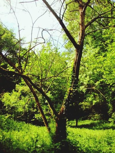 Tree Nature Photography Natural Light Magnificent Nature Growth Green Color Beauty In Nature Tranquil Scene Grass Forest Tranquility Freshness Scenics Fairytale  WoodLand Surrey