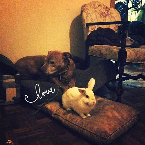 Love Bunny  Doggy PuppyLove Fluffybunny Gaurdianbunny Securitydog Security