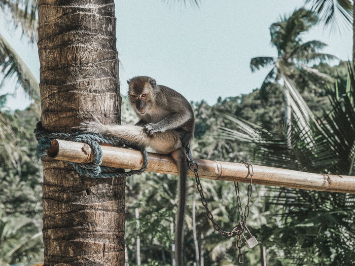 Low angle view of monkey sitting on wood