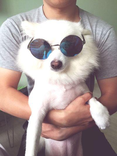 cooper小妞❤️ 狐狸犬 小女生 墨鏡 First Eyeem Photo Girl Dog Happy Sunny Cute Pets