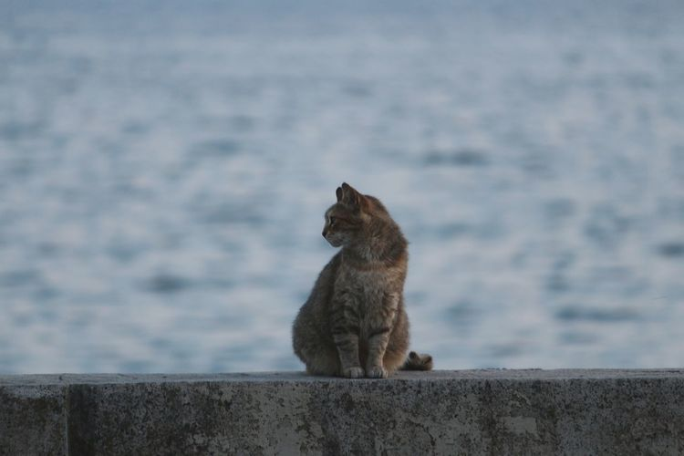 Cat sitting on retaining wall against sea